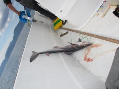 shark?!!! :)