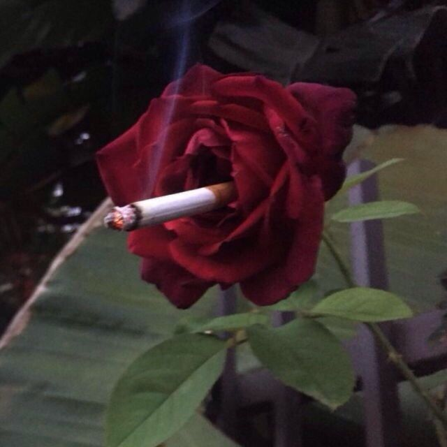 Les fleurs du mal - Jupiter Bc95cd34f1472d2cdcc6d36d0e782c38--james-bond-aesthetic-smoke-aesthetic