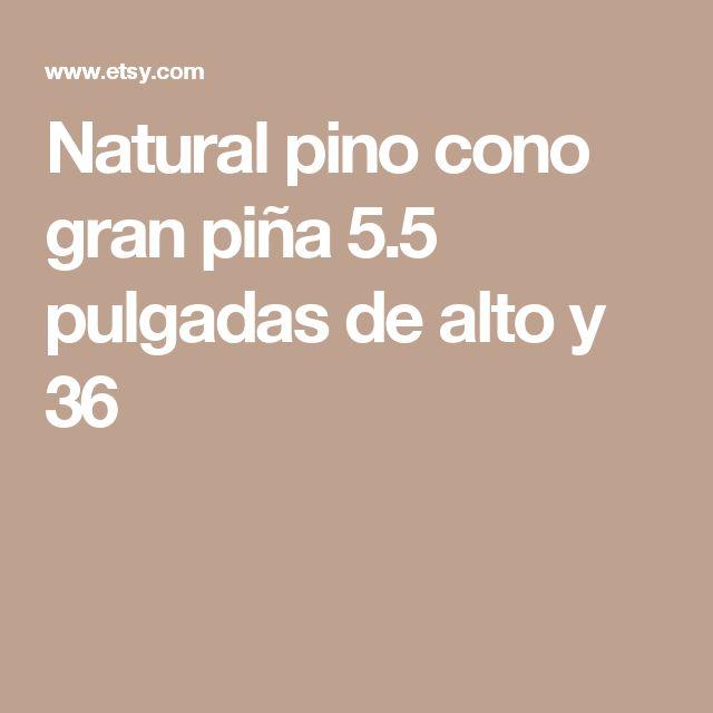 Natural pino cono  gran piña 5.5 pulgadas de alto y 36