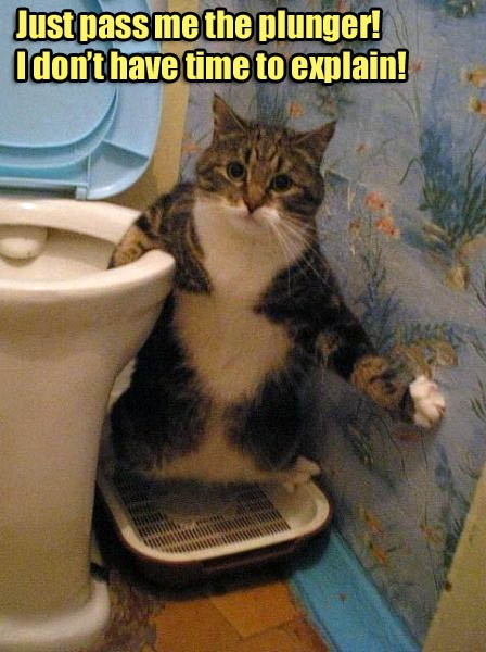 what happens when you teach your kitty to pee & poop in the toiletFunny Kitty, Weights Watchers, Cat Food, Funny Cat, Funnyanimal, Pets, Funny Animal, So Funny, Cat Photos