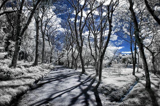 fotos jardim botanico porto alegre : fotos jardim botanico porto alegre: TÍRDHREACH on Pinterest