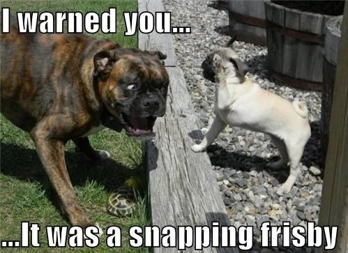 Funny Boxer Dog Meme : 251 best pugs images on pinterest funny pugs pug dogs and pugs