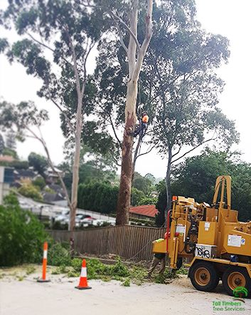 We provide professional tree services and we provide Safe and Effective Tree Pruning Service Hornsby. We guarantee customer satisfaction and we will listen to your special request and provide appropriate advice.
