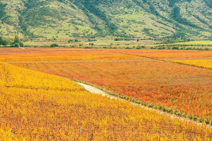 #ValleDeColchagua es ideal para recorrer y tomar hermosas fotos cuando #viajes a #Chile