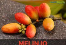 Melinjo-Gnetum gnemon