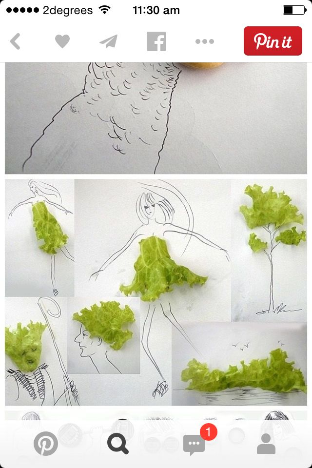 Lettuce drawing