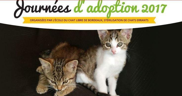 Amis des chats autour de #Bordeaux  il y a vendredi 14 juillet une journée d'adoption à #Pessac organisée par École du chat libre de Bordeaux. Tous les renseignements sont sur leur site et vous pourrez repartir avec votre nouveau compagnon ;) Mais vous pouvez adopter tout au long de l'année et c'est ce que j'ai fait il y a maintenant 3 ans. Vous pouvez également cliquer ici http://ift.tt/2tKa727 chaque clic aide à la stérilisation des chats errants qui est la seule vraie solution pour…