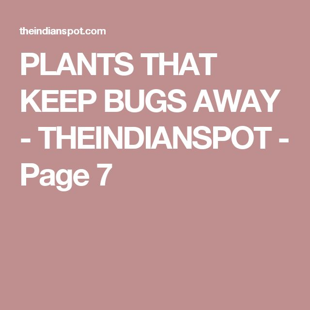PLANTS THAT KEEP BUGS AWAY - THEINDIANSPOT - Page 7