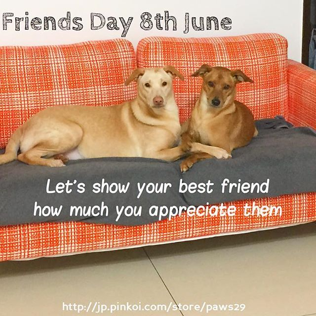Show your best friend how much you thank them. Best friends day = 8th June🐾✨your furry best friends are the best💐💖🐾 6月8日はベストフレンドの日( ´ ▽ ` )ノ🐾💕✨#petlovers #8thjune #bestfeiendday #paws #pinkoi #paws29 #paws29furry #しんゆうのひ #いぬ #ねこ #感謝