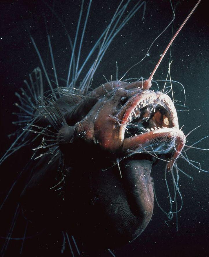 синим глубоководные животные фото совет покупайте
