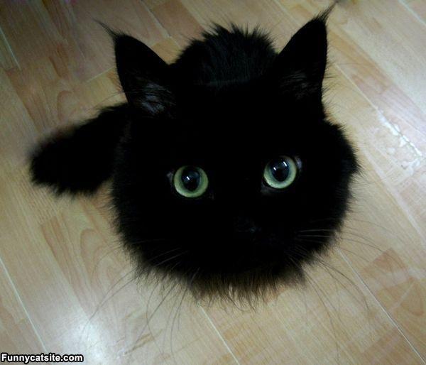 panier chat noir wow