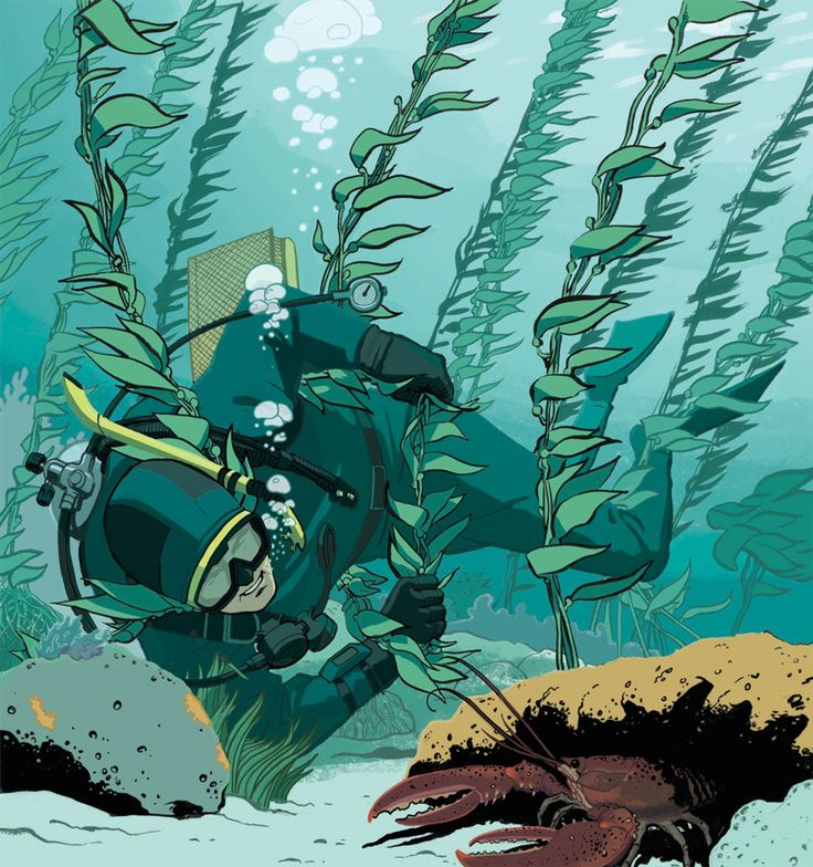 """Another case study in our Dive Training series """"Lessons For Life"""": Panicking while diving in kelp searching for lobster leads to a fatal entanglement for a diver."""