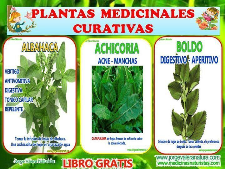 86 best Plantas medicinales images on Pinterest | Medicinal plants ...
