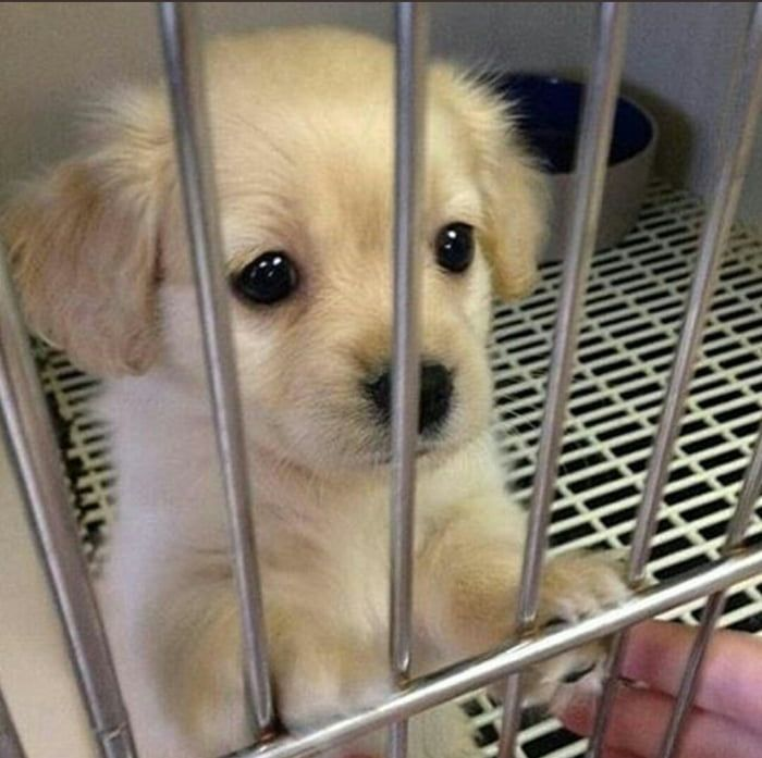 Every Puppy Deserves A Loving Home Puppies Cute Dogs And