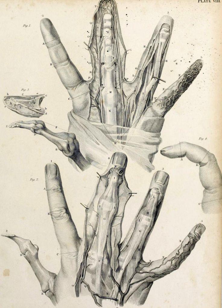 75 besten Anatomía, Botánica, Zoología Bilder auf Pinterest ...