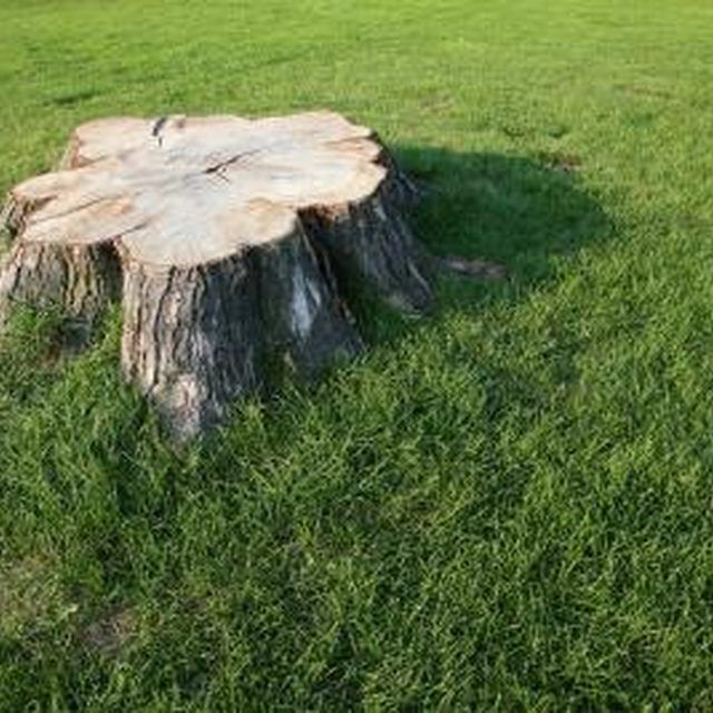 Potassium nitrate speeds up the decomposition of tree stumps.