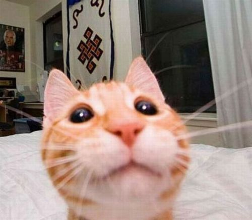 Katzen machen Selfies