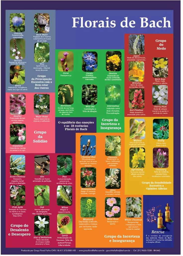 cartaz poster florais de bach 7 grupos emoções frete grátis