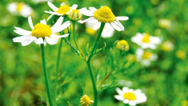 10 healing herbs to grow in your garden    Looking for natural remedies to boost wellbeing? Here are a few to get you started...