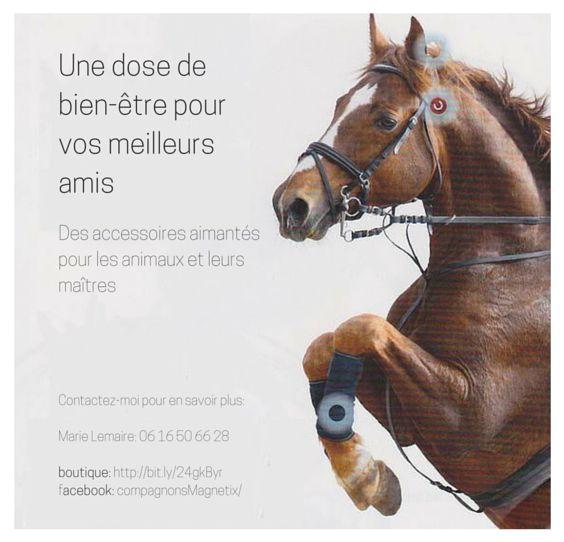 Accessoires magnétiques pour le bien-être des animaux et de leurs maîtres boutique: https://marie.magnetix-wellness.com/fr/shop/aimants-pour-animaux/bijoux-pour-colliers-de-chiens