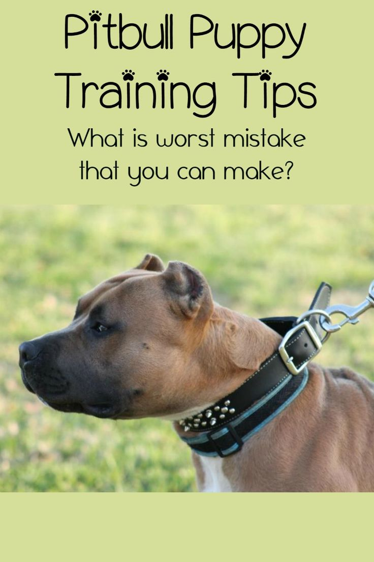 Pitbull Puppy Training Tips - The Biggest Mistake Owners ...