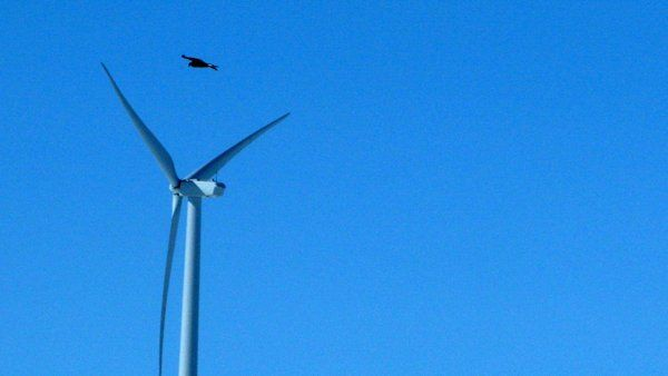 WASHINGTON (AP) — The government for the first time has enforced environmental laws protecting birds against wind energy facilities, winning a $1 million settlement Friday from a power company that pleaded guilty to killing 14 eagles and 149 other birds at two Wyoming wind farms.