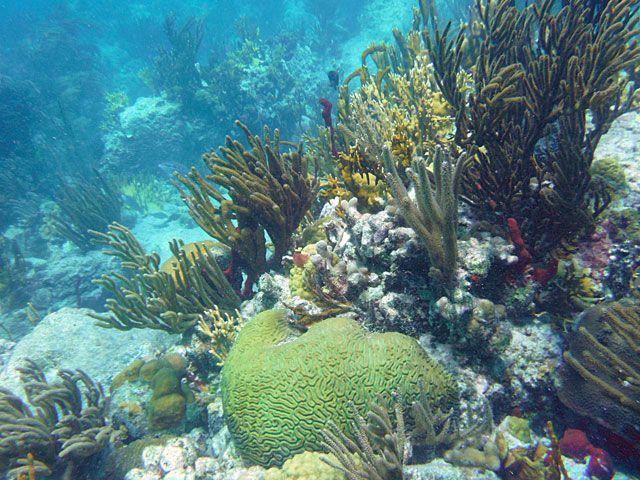 island virgin characterizing protected reef fish