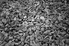 Pebbles | Flickr - Photo Sharing!