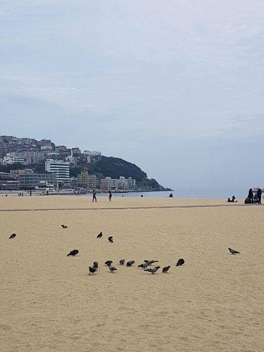 haeundae beach #busan