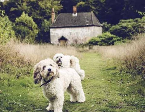 Louis and Charlie exploring the meadow at Blackwood Forest #Hampshire #DogHoliday #PetFriendly #ForestRetreat #UKgetaway  Dog & Pet Friendly Log Cabin & Lodge Holidays UK 2015/2016 - Forest Holidays