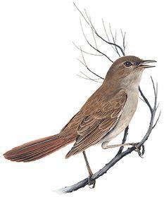 """Résultat de recherche d'images pour """"nightingale tattoo"""""""