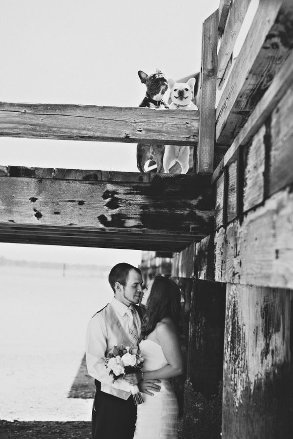 black and white adorable wedding photo with French Bulldogs by Michèle M. Waite