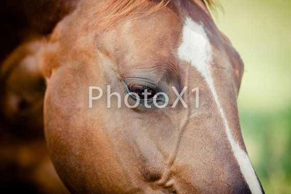 Through the eyes of a Horse 8x10 Print Photo by PhotoX1 on Etsy