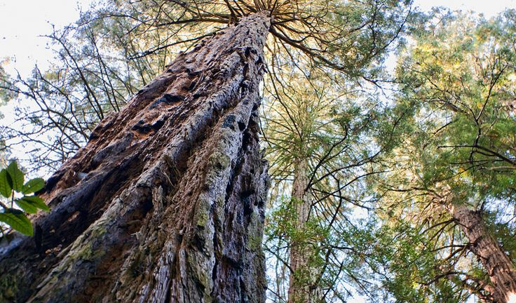 Hike-Past-Giant-Redwoods-at-Muir-Woods-San-Francisco-Travel-Guide-Guiddoo
