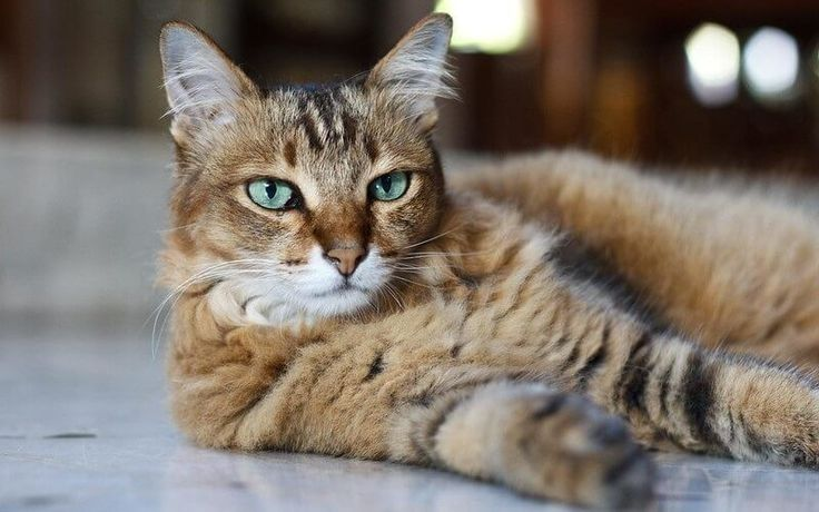 225 Sassy Cat Names Male & Female Name Ideas PetPress