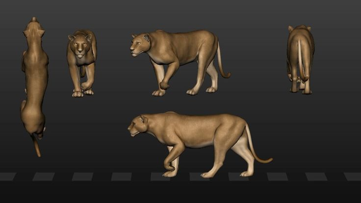 walking big cat animation
