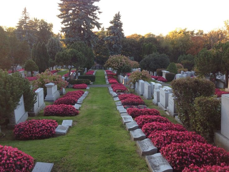 Mount Royal Cemetery. Download the free app to take a self-guided tour of historic burials and learn about the trees.