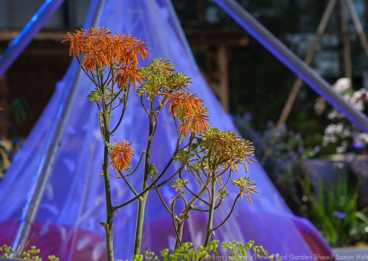 san francisco flower and garden show 2015