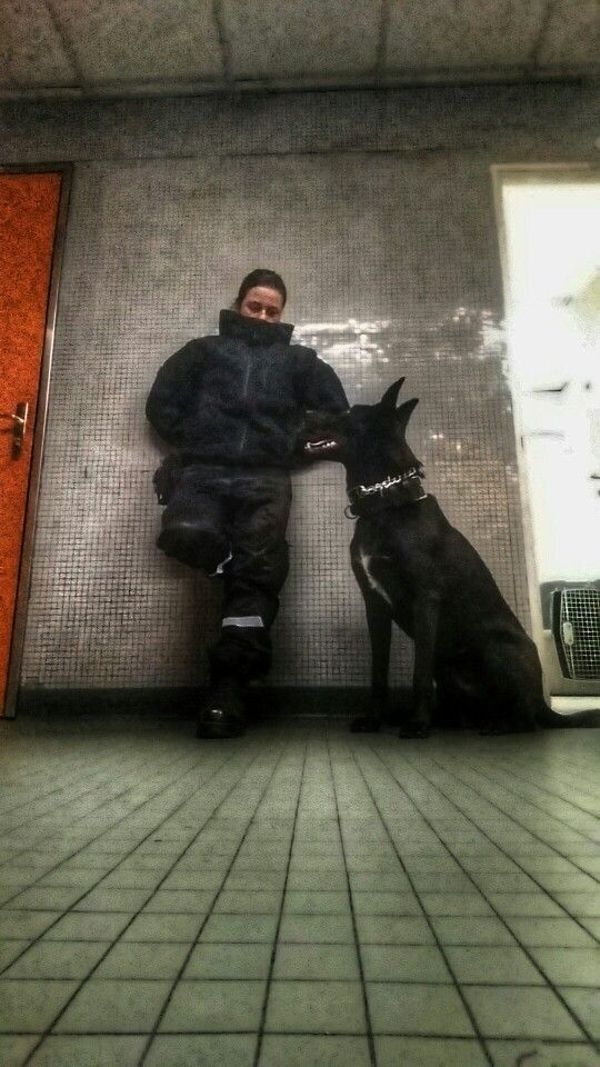 Page : Malinois noir - Black malinois   KNPV