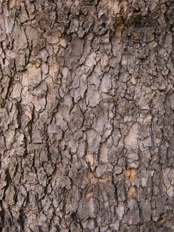 Baumrinde Hintergrund Rinde Braun Nahaufnahme Nahaufnahme Detail Trocken Umgebung Holz Garten Ideen Diy Tree Textures Textured Background Wood Texture