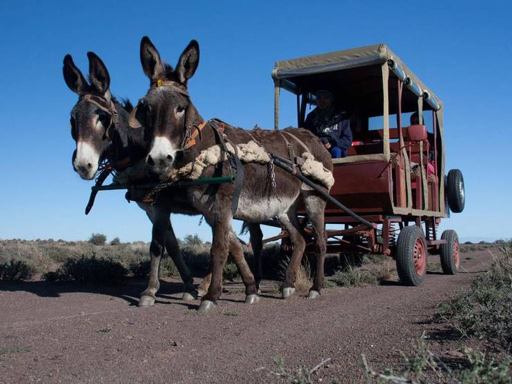 Animals Pulling Wagon : Best animals that can pull a wagon or cart images on