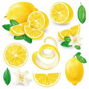 Diferentes limones con hojas y flores vector