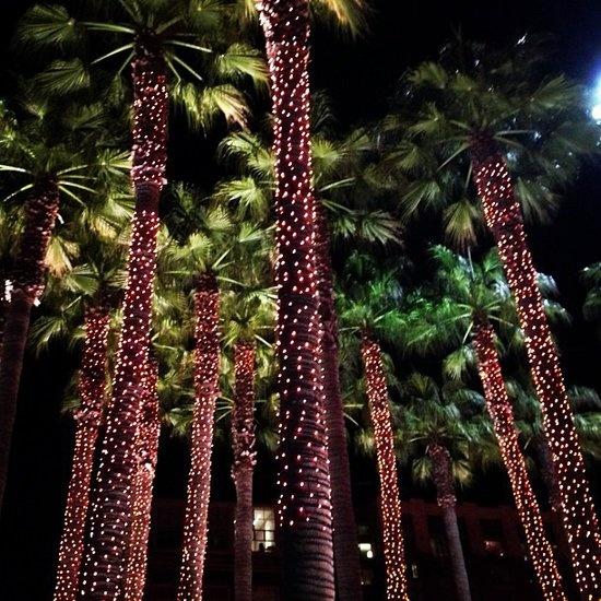 Illuminate Your Tree Trunks Solar Fairy Lightstree Trunksoutdoor
