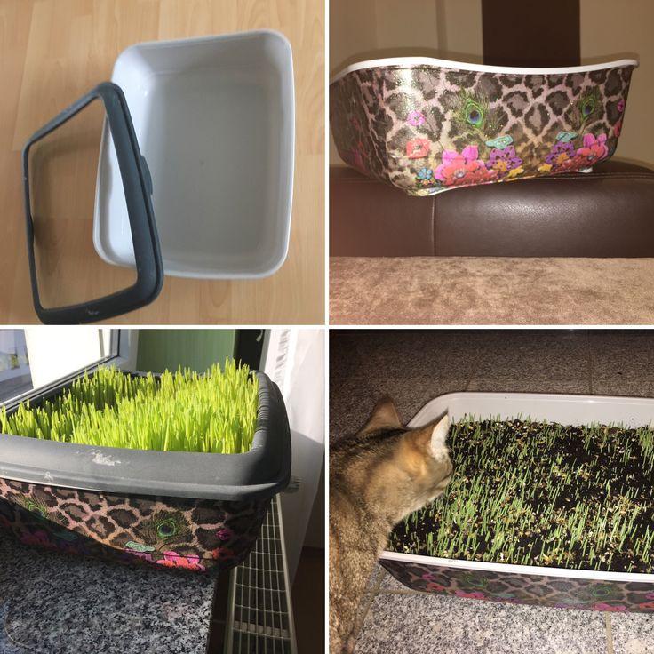 """Aus einer alten Katzentoilette einen kleinen """"Wintergarten"""" für die Mieze gebastelt. Mit Serviettentechnik wurde der Behälter verschönert. Anschließend Katzengras zum selbst züchten auf einer hohen Schicht Muttererde gepflanzt. Nun noch kräftig gießen und von der Katze genehmigen lassen"""
