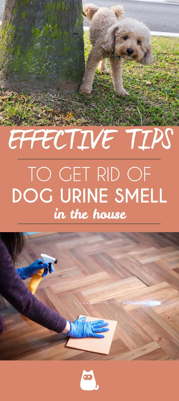 How to Get Rid of Dog Urine Smell | Dogs | Dog urine, Dog