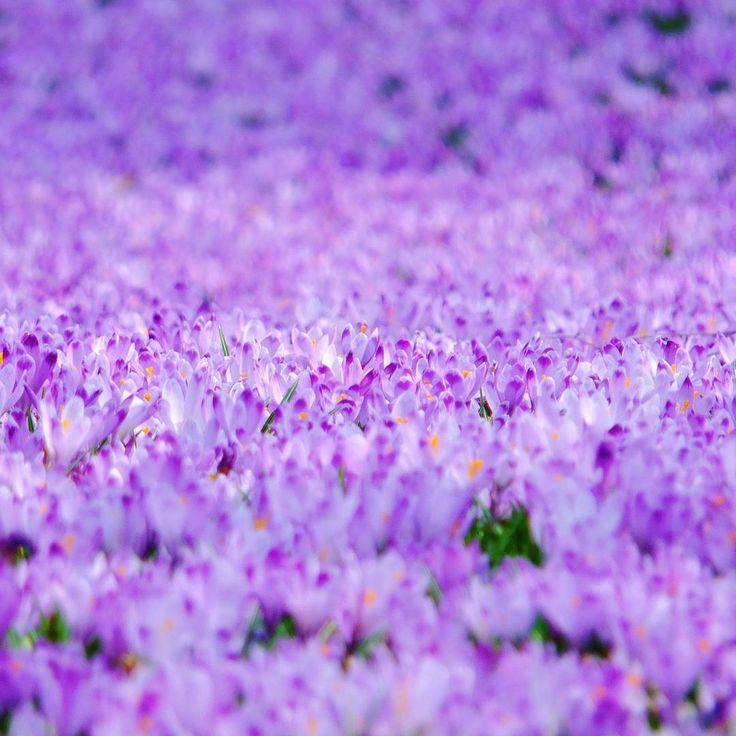 Nouvel article Ostara ouverture de lanne 1 par oxiastones printempshellip