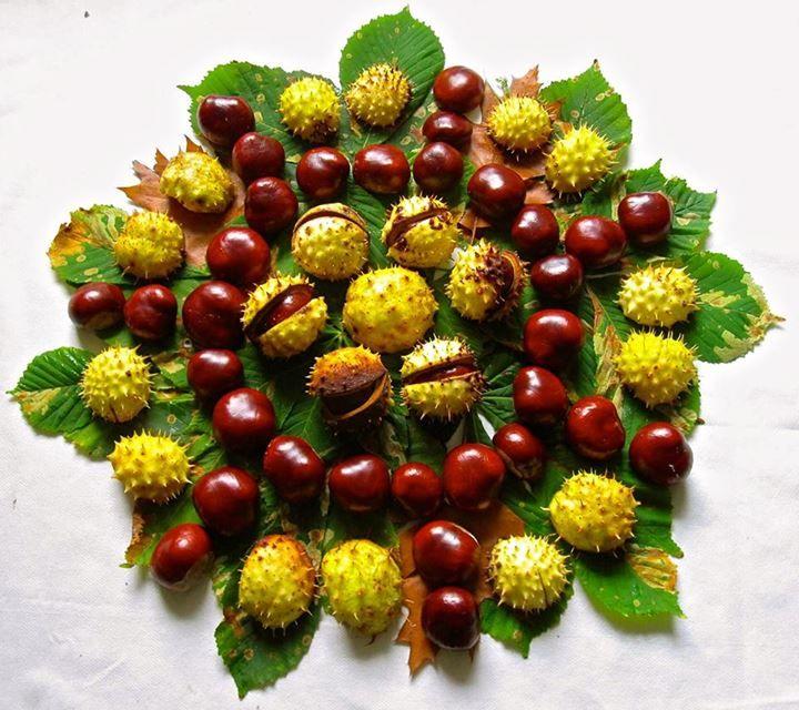 "Love this autumn mandala shared by Nurture Nature ("",)"