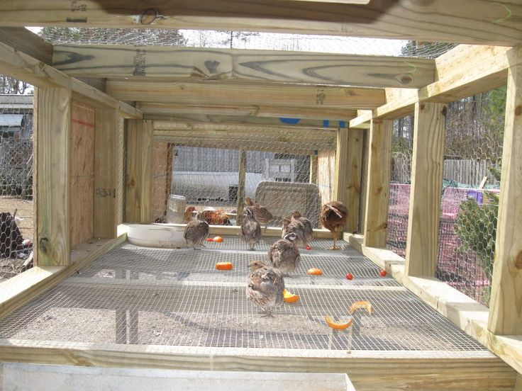80 best images about quail on pinterest chicken coop for Quail housing plans