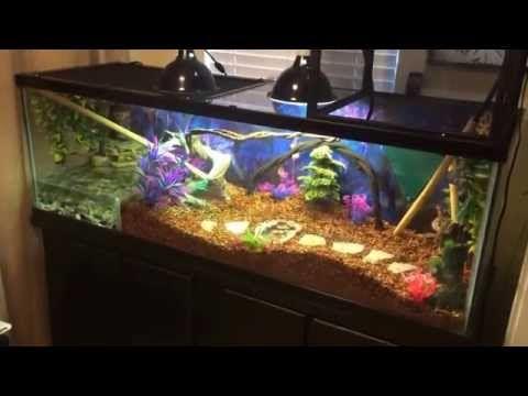 Chinese Water Dragon Terrarium Setup