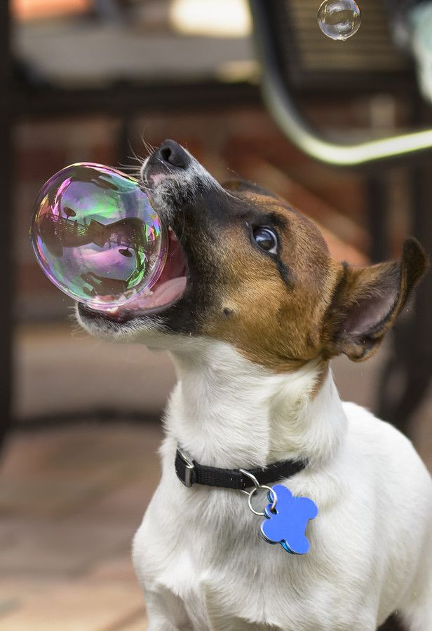 500px ISO » Unbelievable Photography » 22 Endearing Photos Of Animals Playing With Bubbles ... at Bear Tales http://beartales.me/2014/05/20/500px-iso-unbelievable-photography-22-endearing-photos-of-animals-playing-with-bubbles/